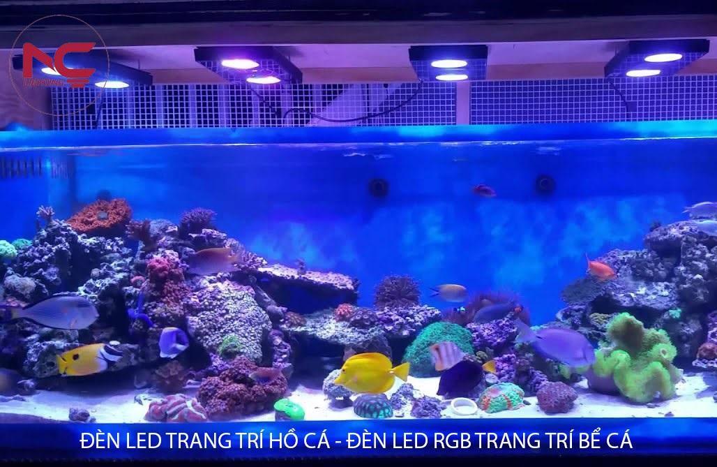 Đèn LED chiếu sáng hồ cá cảnh