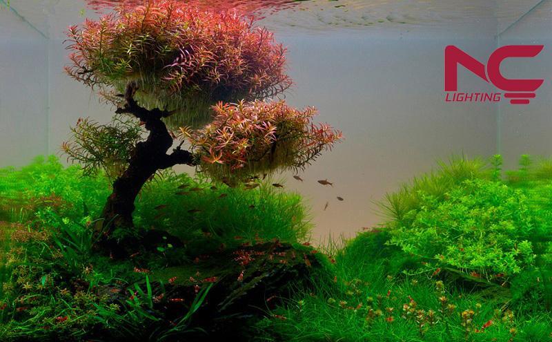 Thời gian chiếu sáng hồ thủy sinh